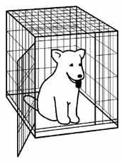 Puppy in a crate, drawing