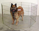 Dog in an exercise pen